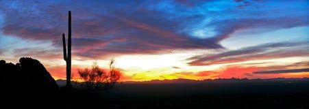 силуэт saguaro стоковое изображение