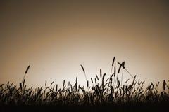 силуэт sepia травы Стоковое Изображение RF