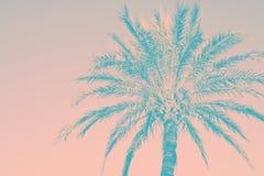 Абстрактная тропическая предпосылка природы Силуэт teal пальмы винтажного розового тонизировал увяданное grungy влияние В стиле ф стоковые изображения