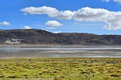 Сильно соляное озеро Drangyer Tsaka в Тибете летом, Китае стоковое изображение