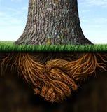 Сильные корни дела Стоковые Фото