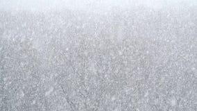 Сильные снежности над лесом видеоматериал