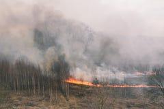 Сильный лесной пожар Горя трава и деревья Сухая трава, дым и пламена Густой дым в лесе стоковое фото