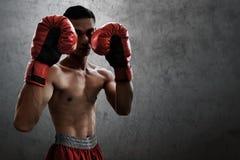 Сильный мышечный боксер на предпосылках стены стоковое изображение rf