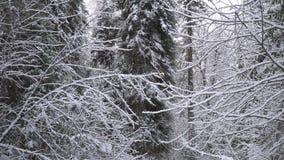 Сильный снегопад в лесе зимы сток-видео