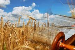 Символы еврейского праздника Shavuot Torah и пшеничного поля стоковое изображение