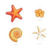 символы звезд моря установленные тропические Стоковые Фото