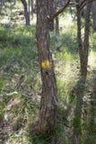 Символы и подписывают внутри пути леса Стоковое Фото