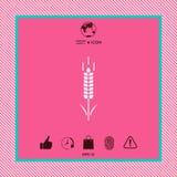 Символ колоска пшеницы или рож Стоковое Изображение