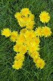 символ лета весны человека одуванчика Стоковое фото RF