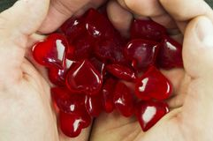 Символ 14-ое февраля сердца в руках Стоковое Изображение