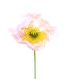 символ памяти мака цветка Стоковое Изображение