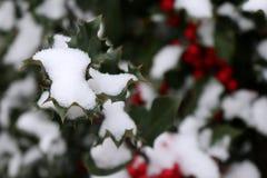 Символ рождества в Европе Крупный план ягод падуба красивых красных и острых листьев на дереве в погоде осени стоковая фотография rf