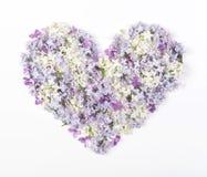 Символ сердца сделанный из изолированных цветков сирени весны на белой предпосылке Плоское положение Стоковая Фотография RF