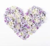 Символ сердца сделанный из изолированных цветков сирени весны на белой предпосылке Плоское положение Стоковая Фотография
