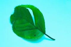 Символ Eco дружелюбный от лист с формой сердца, природным ресурсом стоковые фотографии rf