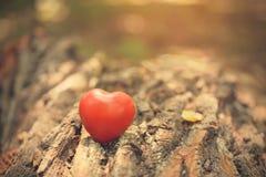 Символ влюбленности на стволе дерева Стоковая Фотография
