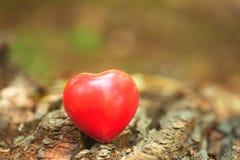 Символ влюбленности на стволе дерева Стоковые Фотографии RF