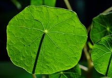 символ зеленого света стрелки авиапорта Стоковая Фотография RF
