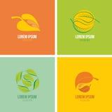 Символические лист сезона на красочной предпосылке Стоковая Фотография