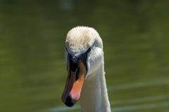 Символ красоты Стоковая Фотография