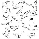 Символы логотип и значки летания птицы Стоковые Фотографии RF