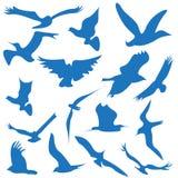 Символы логотип и значки летания птицы Стоковая Фотография