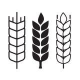 Символы уха пшеницы Стоковая Фотография