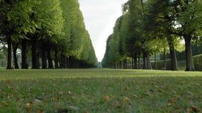 Симметрично растущая роща деревьев в середине травы лужайки В расстоянии, неузнаваемый охотничий домик акции видеоматериалы