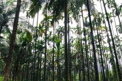 Симметричные деревья делая некоторую внушительную симметрию Стоковое фото RF