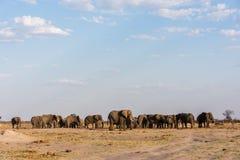 Симметрия слона стоковые фото