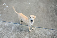 Симпатичная бездомная собака Стоковые Изображения
