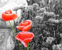 симпатичная весна Стоковая Фотография
