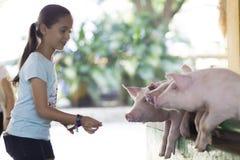 Симпатичная девушка подает свинья Стоковая Фотография