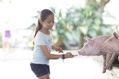 Симпатичная девушка подает свинья Стоковые Фото