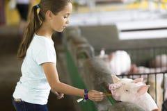 Симпатичная девушка подает свинья Стоковая Фотография RF