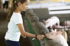 Симпатичная девушка подает свинья Стоковые Фотографии RF