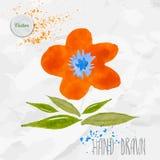 Симпатичная оранжевая карточка цветка Карточка дня валентинки вектора акварели Бесплатная Иллюстрация