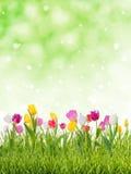 Симпатичная предпосылка весны Стоковое фото RF