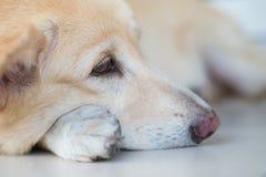 Симпатичная собака ждать ее маму Стоковая Фотография