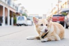 Симпатичная собака на дороге Стоковые Фотографии RF