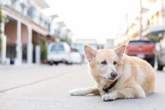 Симпатичная собака на дороге Стоковые Изображения RF