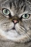 Симпатичная сторона кота стоковое фото rf