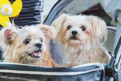 Симпатичная сторона собаки в саде Стоковое Изображение