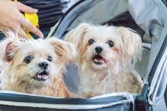 Симпатичная сторона собаки в саде Стоковое Фото