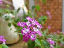 Симпатичная фиолетовая флора стоковые фотографии rf