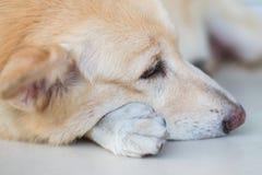 Симпатичная эмоция собаки Стоковая Фотография RF