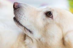 Симпатичная эмоция собаки Стоковое Фото