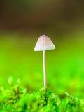 Симпатичное королевство гриба Стоковые Изображения RF