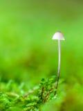 Симпатичное королевство гриба Стоковое Фото